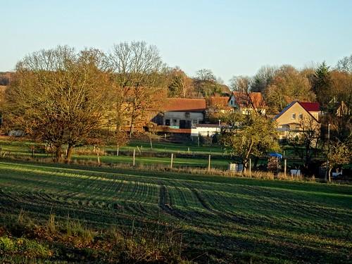 Maulbeerwalde