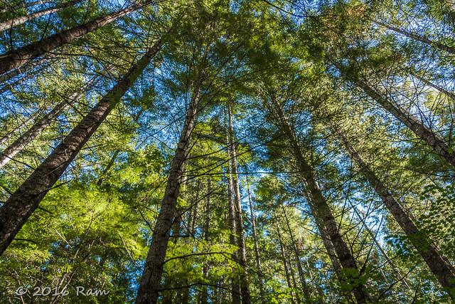52 Weeks of Pix 2016 - Trees