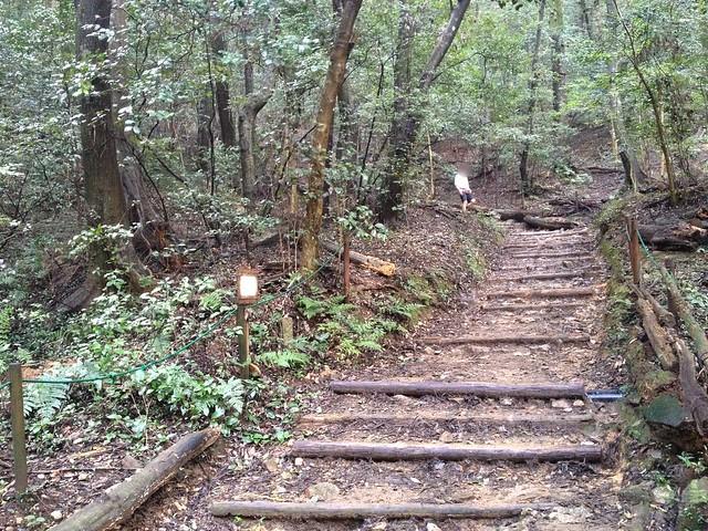 金華山 東坂登山道 丸太階段