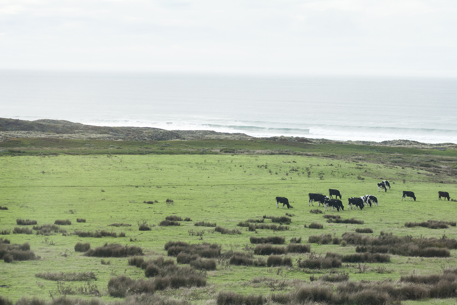 09pointreyes-seashore-coast-cows-travel-style