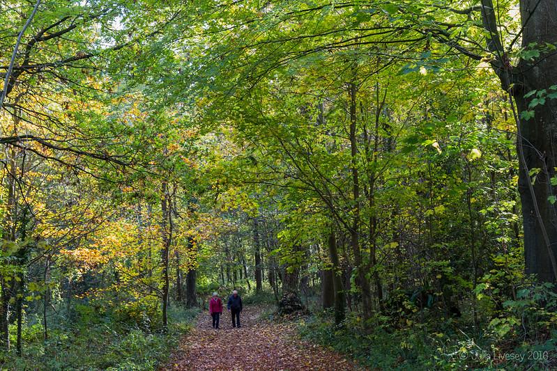 Wallking through the Woodland Walk in Autumn