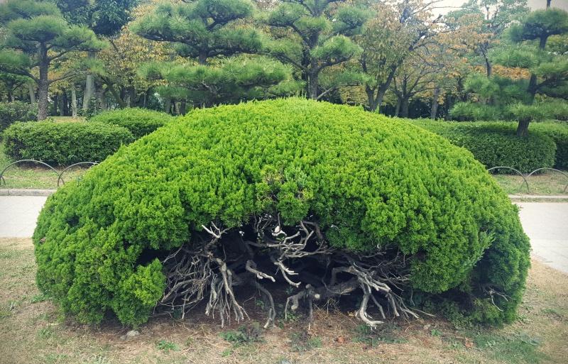 Osaka trees