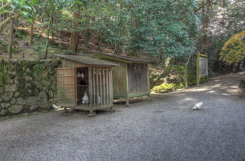 Isonokami Jingu Shrine on NOV 30, 2016 vol02 (23)
