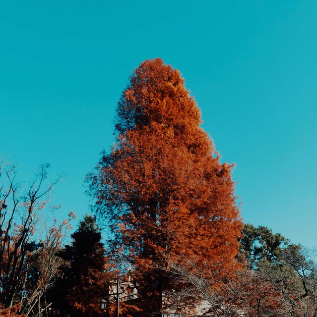 Autumn tree (red)