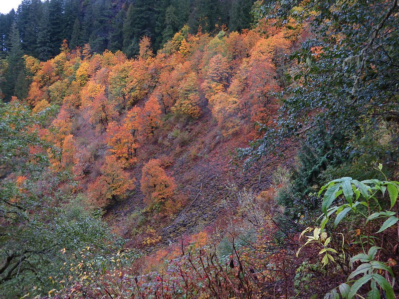 Fall colors along the Nesmith Point Trail