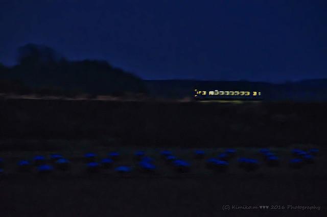 豆ニオがある夜の鉄道風景
