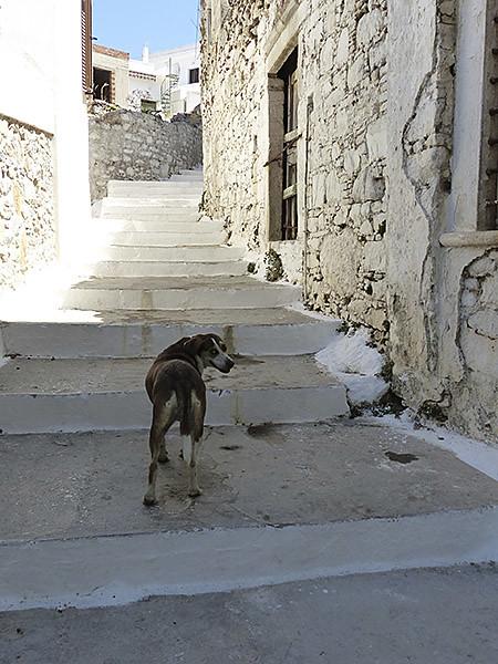le chien de filoti 1