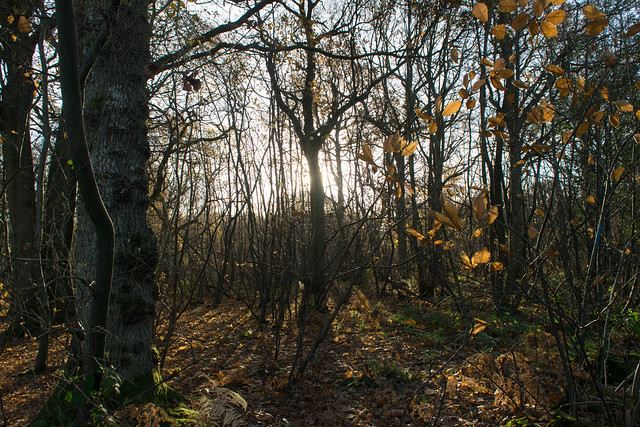 DSC_5453 Autumn woodland