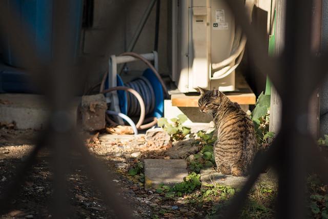 庭でくつろぐネコの写真