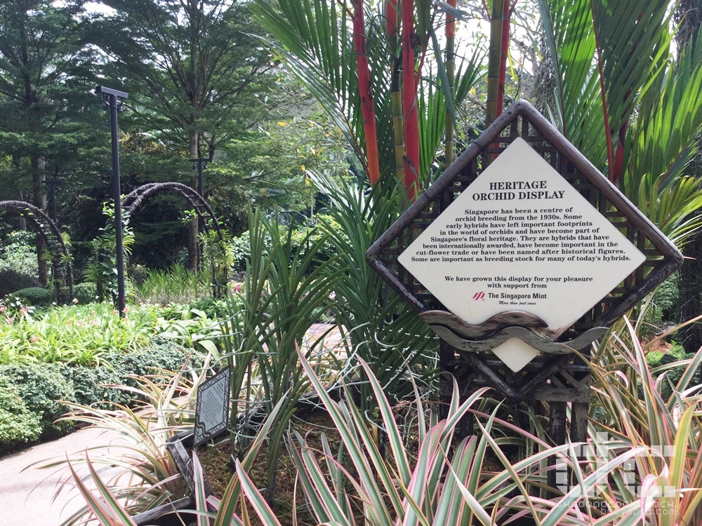botanic gardens, places of interest, singapore, singapore botanic gardens, unesco,  where to go in singapore, national orchid garden,heritage orchid display,orchid