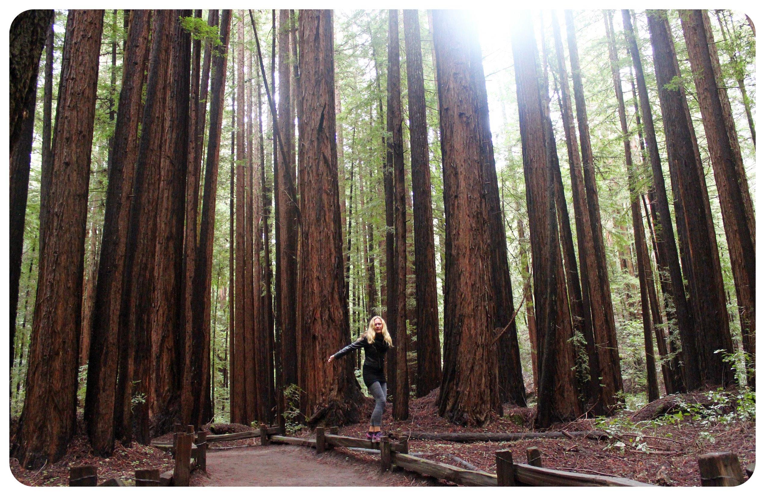 dani redwoods