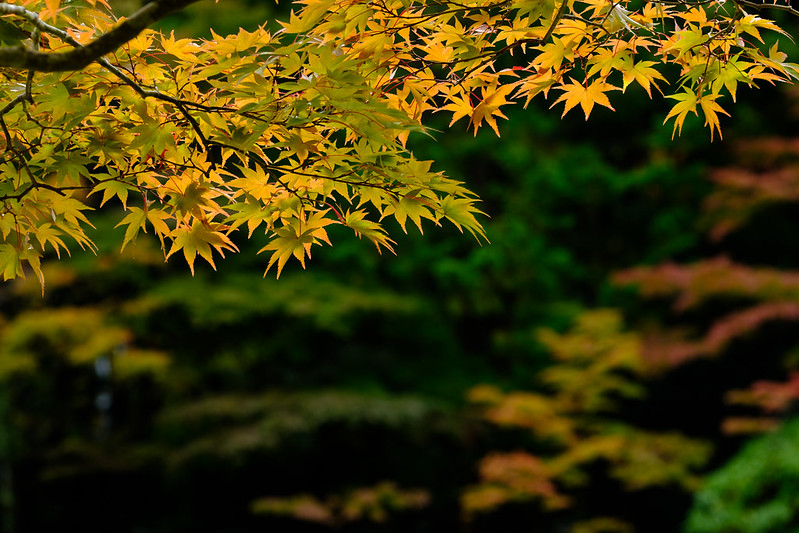 Early autumn color of JAPAN