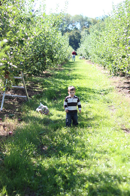 applepicking 030