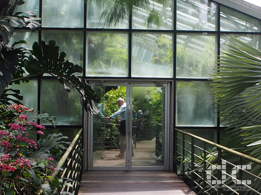 botanic gardens, places of interest, singapore, singapore botanic gardens, unesco,  where to go in singapore, national orchid garden,coolhouse