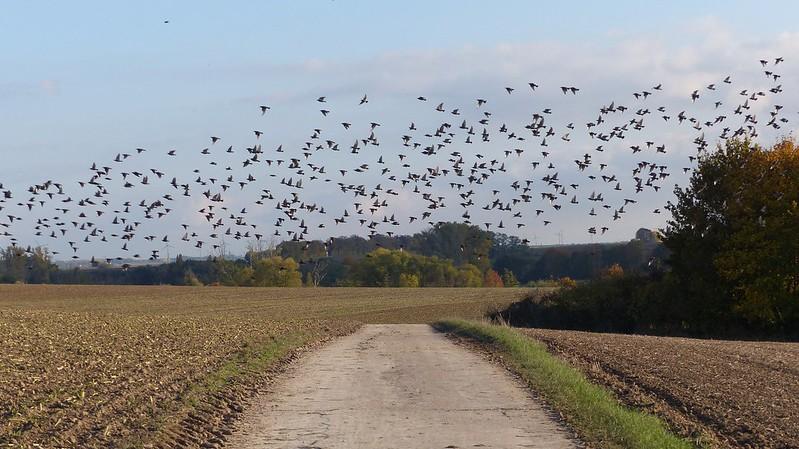 """""""Die Vögel"""" bei Sörgenloch"""