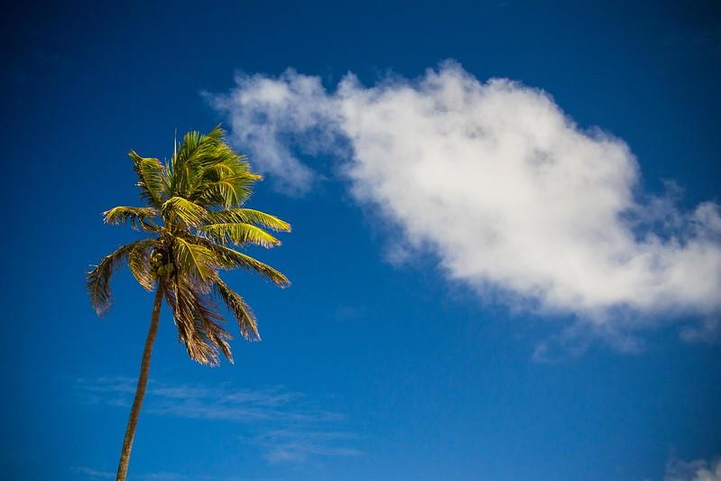 Riviera Palm