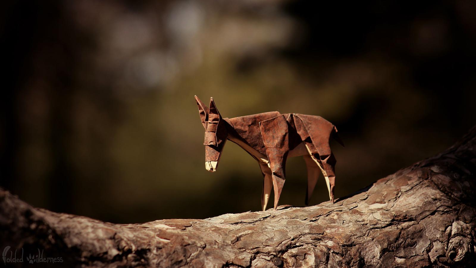 A Donkey's journey