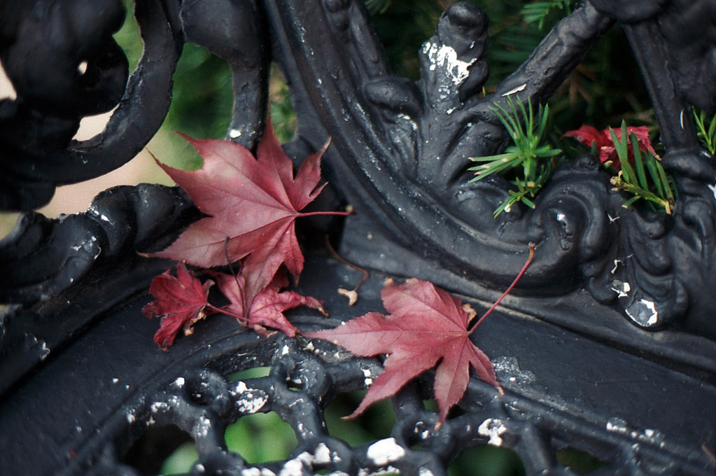 Leaves on the iron bench *EXPLORED*