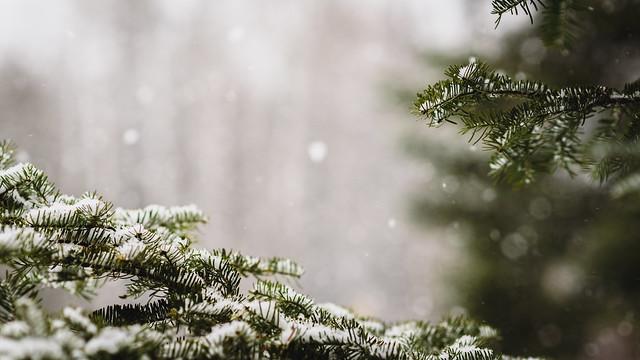 2016 11 30 Snowy Day 009