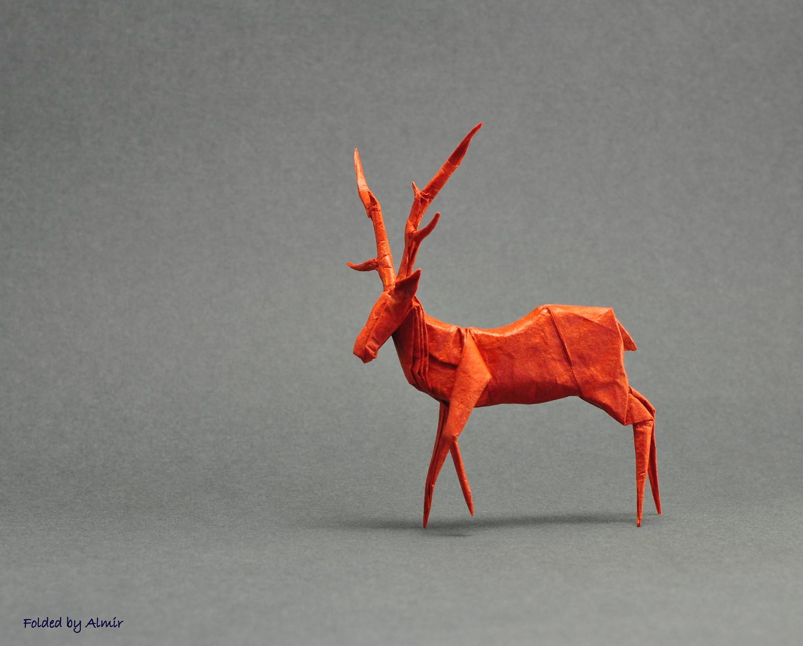 Deer by Yasushi Miyashita