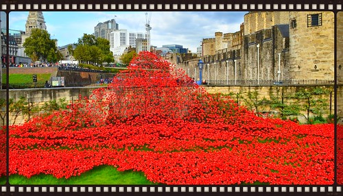 tower bridge ceremic poppies 2