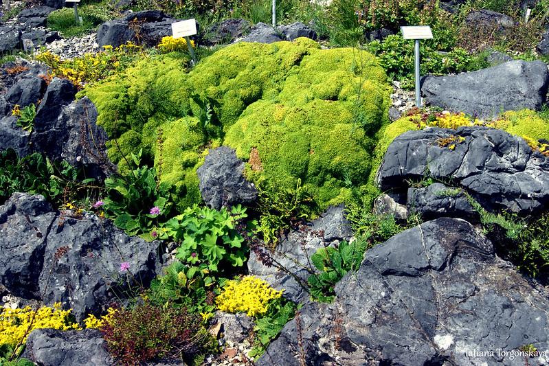 Растения альпийской горки