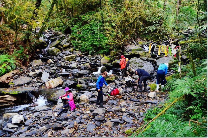 巨木群登山步道雙溪匯流處