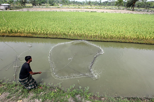 A fish farmer casting his net in Khulna, Bangladesh. Photo by M. Yousuf Tushar. April 18, 2014