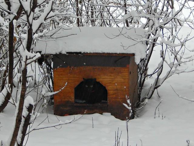 Чёрный кот Зёмочка в будке | HoroshoGromko.ru