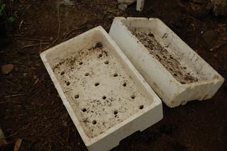 Semillero caja de pescado