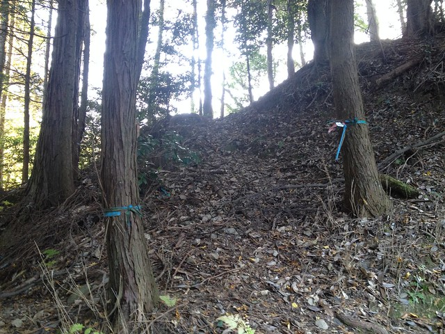 朝倉山 真禅院ルート 尾根入口