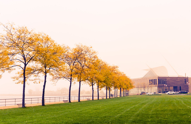 Gold Trees on Lakefront