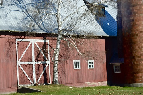 Barn and birch