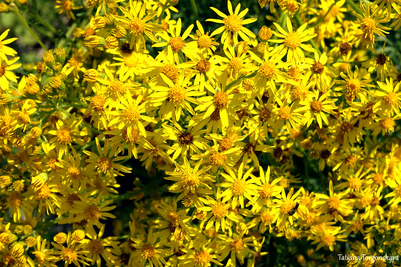 Цветы на холме