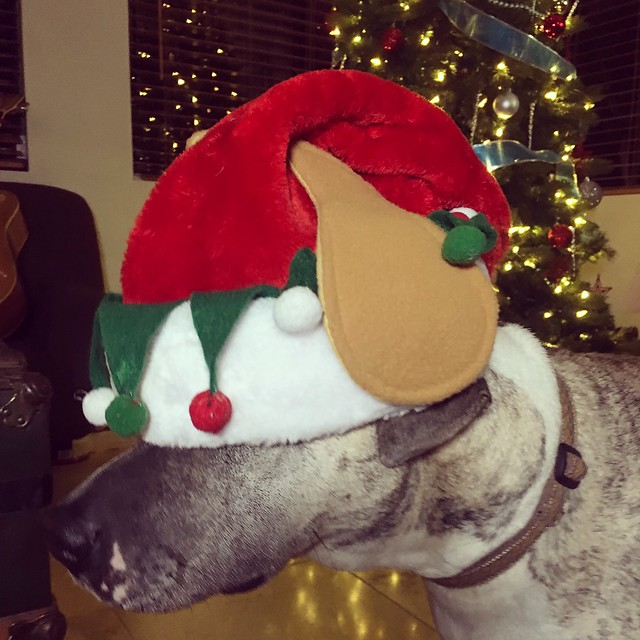 Axl is feeling the holiday spirit