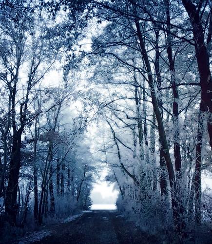 Eisiger Weg in die Felder