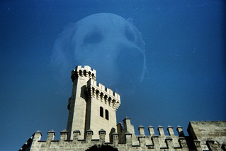 Palma tower with ghost dog