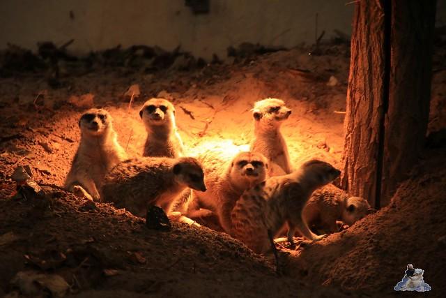 Eisbär Fiete im Zoo Rostock 05.11.2016 080