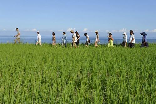 [花蓮] 新社部落│周邊景點吃喝玩樂懶人包 (2)