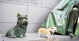 Roosevelt and Corgi