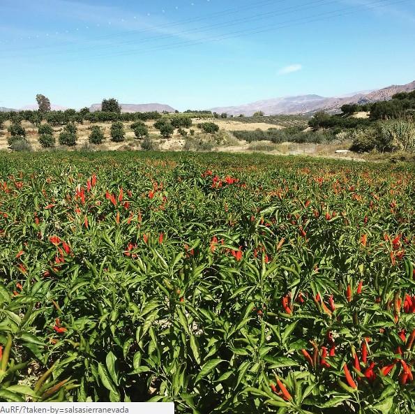Salsas Sierra Nevada 2