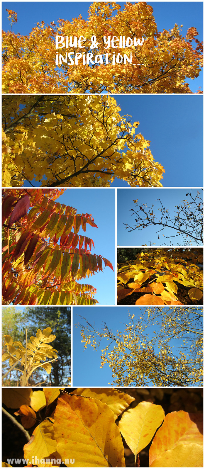 Sweden in fall colors photo copyright Hanna Andersson @ihanna #sweden