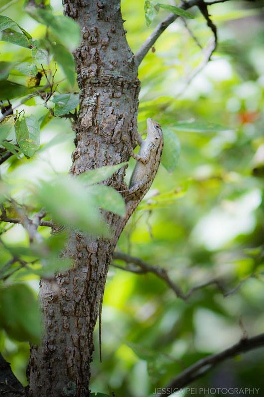 Arbor Hills Nature Preserve Lizard