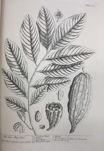 herbal16