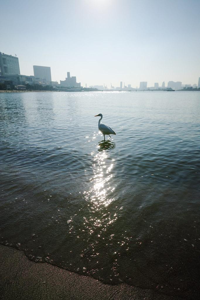 20161105_153_第6回シグブラフォトウォークinお台場