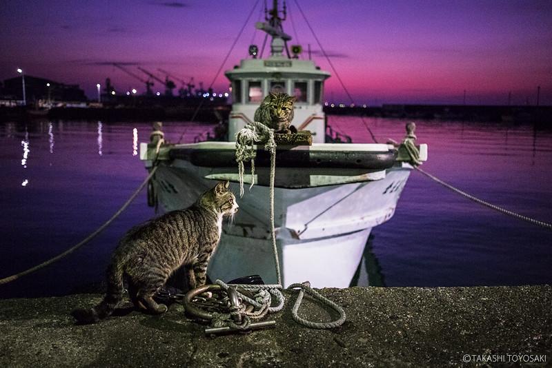 Tokushima Cat Color #249