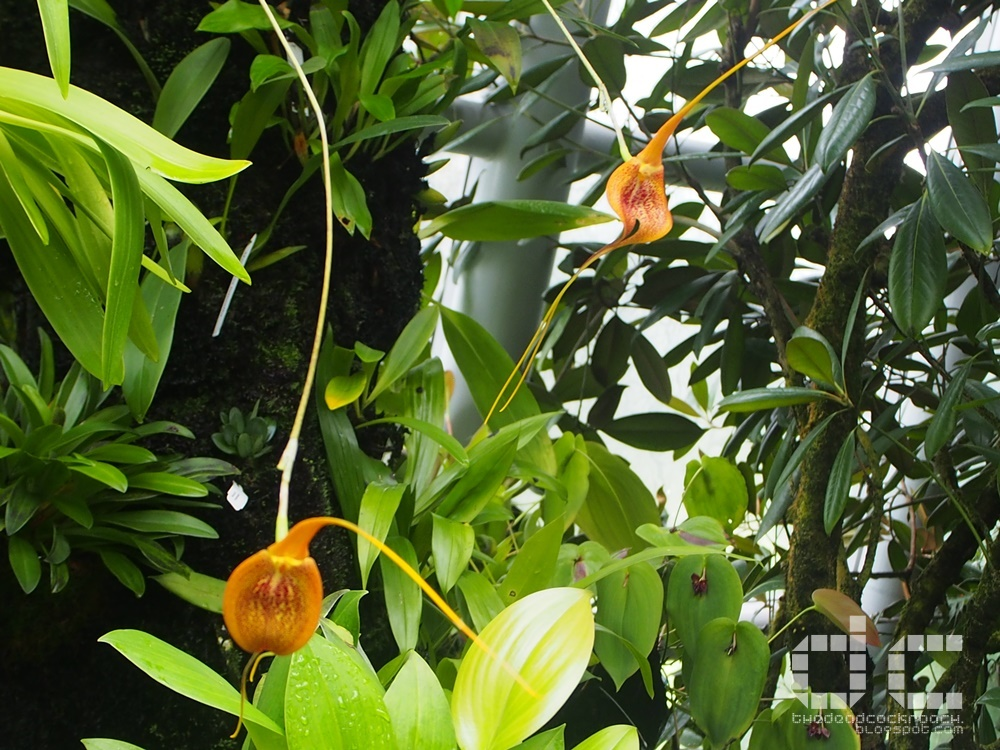botanic gardens, places of interest, singapore, singapore botanic gardens, unesco,  where to go in singapore, national orchid garden,coolhouse,orchid