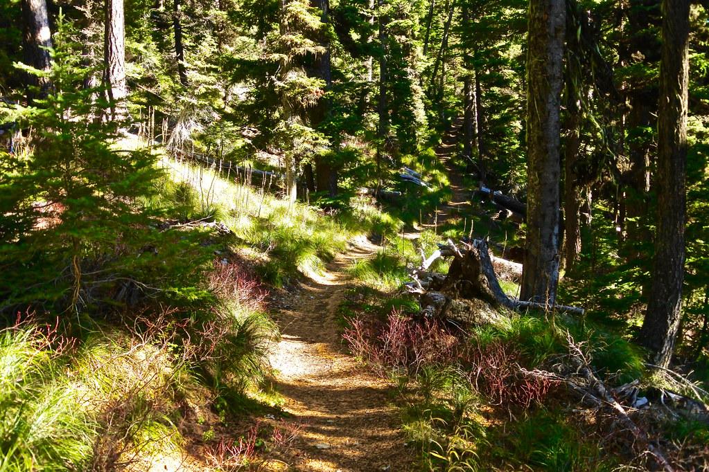 Cabin Lake trail 11