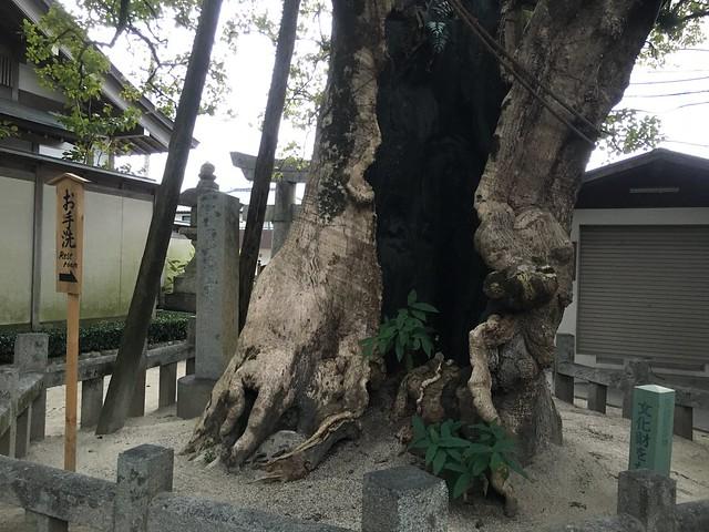 後門的廁所外面有棵巨樹