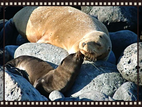 snuggley sea lions